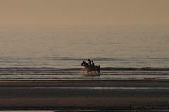 Belgian coast (Natali Antonovich) Tags: sunset sea portrait horses horse beach nature water animals silhouette landscape seaside horizon lifestyle horsemen northsea romantic relaxation seashore seasideresort horseman romanticism belgiancoast wenduine seaboard