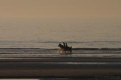 Belgian coast (Natali Antonovich) Tags: sunset sea portrait horses horse beach nature water animals silhouette landscape seaside horizon lifestyle horsemen northsea romantic relaxation seashore seasideresort horseman romanticism belgiancoast wenduine seaboard
