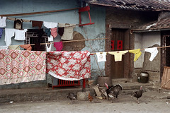 33-203 (ndpa / s. lundeen, archivist) Tags: nick dewolf nickdewolf color photographbynickdewolf 1970s 1972 fall film 35mm winter republicofchina taiwan taiwanese china chinese 1973 building house home localhome door doorway clothes clothesline bird turkey birds turkeys clotheslines chicken 33 reel33