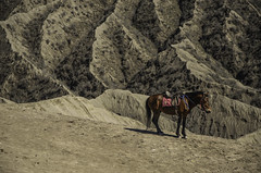 Alone Horse (narenrit) Tags: alone horse top hill valcano mount mountain tore travel