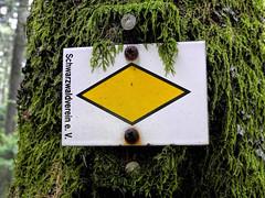 Schwarzwaldverein e. V. (sigi-sunshine) Tags: schwarzwald blackforest verein schwarzwaldverein raute gelberaute moos wegweiser sign zeichen nagel nail