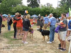 DAT2016_Crowd_1092 (greytoes_99) Tags: agility dat2015 dat2016 event humanesocietytacoma people summer tacoma tacomahs volunteers dog humananimalbond cat lakewood wa us