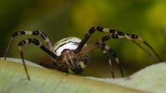 DSCF9959 (faki_) Tags: fuji fujifilm xe1 fujinonxf60mmf24rmacro 60 24 rovar insect pk spider