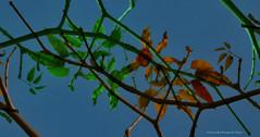 curvas (ojoadicto) Tags: nature naturaleza digitalmanipulation manipulaciondefotos hojas leaves ramas artisticphotography
