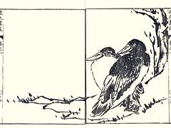 Jianhua duck (Japanese Flower and Bird Art) Tags: bird jianhua duck anatidae ryotai tatebe nagasaki woodblock picture book japan japanese art readercollection
