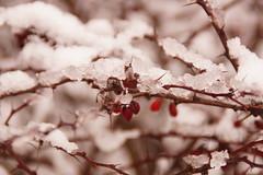 Thaw (Sergei P. Zubkov) Tags: january 2014 snow