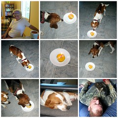 Celebrating Nike's Second Birthday (genesee_metcalfs) Tags: collage summer september family fun dad grandma birthday cupcake candle pets dog beagle home