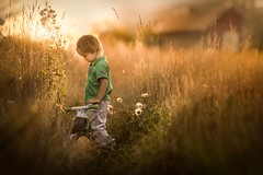 Golden fields (iwona_podlasinska) Tags: childhood child bike field gold house boy