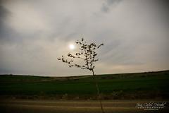 Rama solitaria. (jchmfoto.com) Tags: rayosdesol paisaje solitario torremochadejarama comunidaddemadrid espaa es