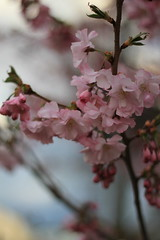 (adeline_fray) Tags: primavera germany deutschland spring karlsruhe allemagne printemps germania frhling badenwrttemberg