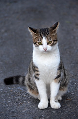 Island Cat (BBMaui) Tags: travel tourism cat turkey islands kitten feline turkiye istanbul trkei ottoman bosphorus constantinople turque adalar