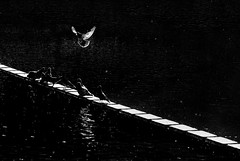 426 (gezimania) Tags: park street light urban blackandwhite bw pool birds contrast garden morninglight hungary budapest sokak havuz siyahbeyaz ik kular ehir budapete macaristan