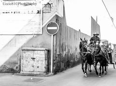 Carrozzella- Marrakech (Uccio81 α) Tags: b bw horse dc sony sigma bn marrakech ob 18200 cavallo bianco nero fotocamera carrozzella 3563 uccio81 dslra580