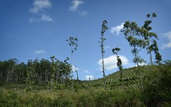 Bucca Creek forestry (dustaway) Tags: landscape countryside day forestry sunny australia nsw australianlandscape northcoast regrowth clarencevalley northernrivers buccacreekvalley orararivervalley