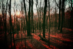 (miles smile) Tags: wood autumn trees sunset mountain fall nature leaves forest outdoor deadleaves tamron1750mmf28