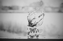 Coffee Splash BW (HugsNotDrugs11385) Tags: blackandwhite bw butterfly butterflies bugs mug splash blackandwhitephotography splashphotography coffeesplash
