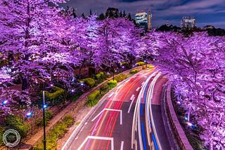 SAKURA Drive, Tokyo