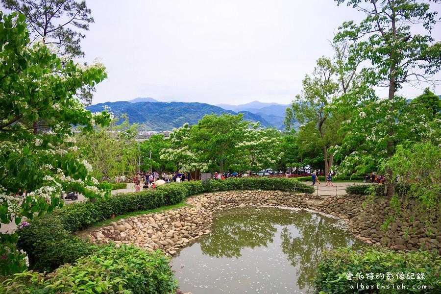 苗栗銅鑼.桐花公園