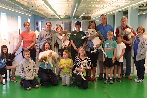 """Puppy Head Start, Session C, Winter 2015-Sat; Class Photo-02 • <a style=""""font-size:0.8em;"""" href=""""http://www.flickr.com/photos/65918608@N08/17158465290/"""" target=""""_blank"""">View on Flickr</a>"""