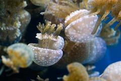BI6A0301 (emilie raguso) Tags: california family vacation aquarium monterey december pacific montereyaquarium 2014 2015 december2014