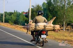 Pig Transporter - Along The Way