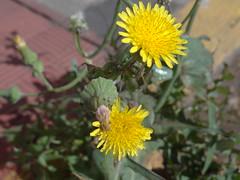 DSC04917 (familiapratta) Tags: flowers flores flower nature iso100 sony natureza flor hx100v dschx100v
