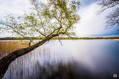 (lotl.axo) Tags: longexposure trees plants lake nature water clouds reflections germany landscape deutschland see wasser natur pflanzen wolken landschaft bume langzeitbelichtung mecklenburgvorpommern spiegelungen travelphotography reisefotografie mecklenburgischeseenplatte krakowamsee krakowersee walimexpro12mm120csc