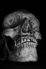 Skull (4)_marked (LewisWhitePhotos) Tags: skull skeleton bones human biology studio studiosetup setup blackandwhite reflection detail photo photography picture creepy scary unusual head studioshoot monochrome black background surreal