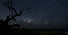 Early morning (tree.twisted) Tags: milkyway stars night nightsky astral nature landscape twistedtree earlymorning nightphotography canberra 2016 nikon1424mmf28