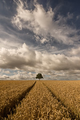 In a field of one (grbush) Tags: tree lonetree landscape minimalist minimalism sky clouds summer field wheat rural countryside england uk bedfordshire leadinglines swineshead sonyslta77 tokinaatx116prodxaf1116mmf28