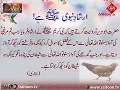 16-3-16) zafar cuutuer (zaitoon.tv) Tags: saw message prophet mohammad islamic quran namaz hadees ahadees