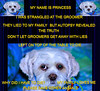 Stranged At The Groomer,Toronto,Canada (OdeteCondeOliveira) Tags: groomer pincess strangled liar love loss autopsy necropsy lhasa shih tzu shitzu puppy dog