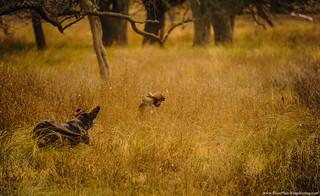 Uruguay bird hunting 45