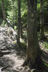 The Bluff Wilderness Trail (HalifaxTrails.ca) Tags: halifax timberlea blt nova scotia hiking back country trail tree summer bluff wilderness