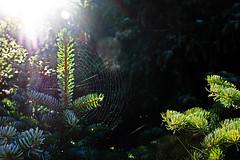 Spinnennetz (Rüdiger Stehn) Tags: altenholz altenholzstift 2000s 2016 norddeutschland mitteleuropa europa schleswigholstein deutschland nahaufnahme spinnennetz 2000er germany natur canoneos550d
