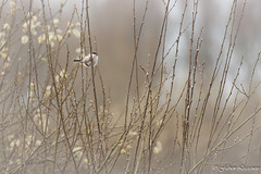 Discrtement (Fabien Legagneur) Tags: oiseau bird discret sobre nature animaux animal plumes canon eos500d eos extrieur