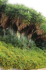 (B Plessi) Tags: sicilia syracuse sicily siracisa pianta plante