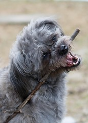 Maggie (carriethruthelens) Tags: dogs sticks