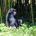 Mgahinga Gorilla NP, Western District.