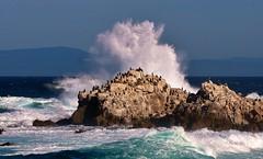 Pt. Pinos At High Tide (Michael T. Morales) Tags: cormorants rocks montereybay wave pacificgrove ptpinos