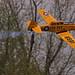 RDRC Flying - T-6 Texan