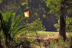 The Ninth Hole (DaveFlker) Tags: golf back flag nine course echuca