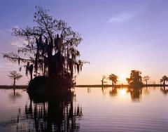 Blue Cypress Sunrise (AlexBurke) Tags: blue lake film sunrise florida large swamp 4x5 format cypress ektar