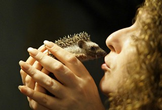I kissed a hedgehog.....