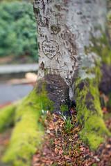 <3 (Birgit F) Tags: park norway lensbaby norge moss spring kristiansand vår selectivefocus mose vestagder ravnedalen edge80