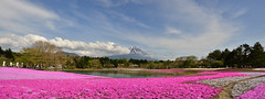 [Group 1]-DUY_0854_DUY_0859-5 images (Anh Duy Mai) Tags: pink blue japan nikon fuji may mount 2015 shibazakura d7000 mospink