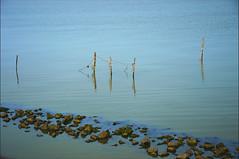 View from the dike (angelsgermain) Tags: blue summer water netherlands waddenzee stones dam engineering calm northsea poles minimalism dike noordholland afsluitdijk ijselmeer northholland enclosingdike