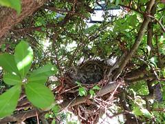 IMG_1349_Fotor01 (Ela's Zeichnungen und Fotografie) Tags: baby nest natur hannover tier vogel busch kcken