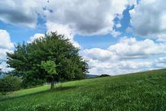 Tree on a hill (CW Photographie) Tags: tree meadow sky green blue bliss etschberg deutschland
