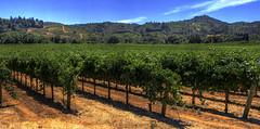 Dry Creek (Scott --) Tags: dry creek sonoma healdsburg california ca winery vineyard wine vino mountians grapes vines green canon 70d